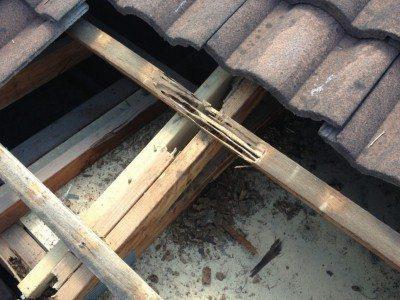 Termite-damage-Brisbane--1030x773